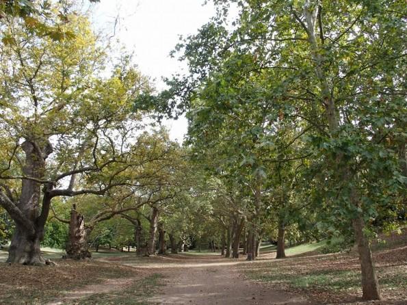 De rustgevende bossen in het park van Villa Borghese