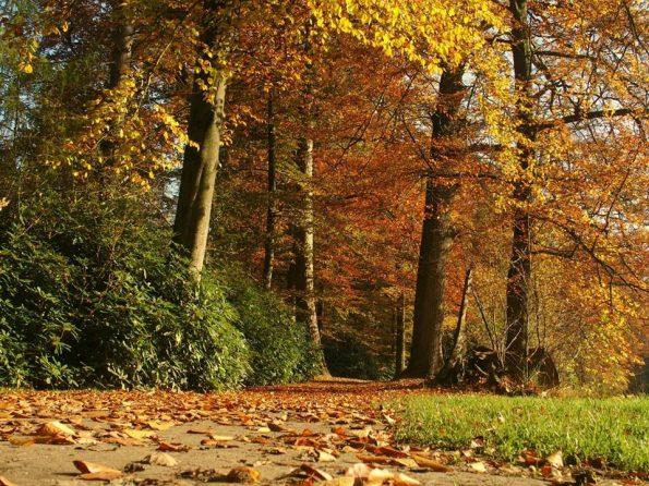 Heerlijk wandelen op Landgoed Twickel