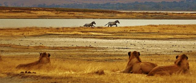 Zou ik over tien jaar Tanzania al eens bezocht hebben?!