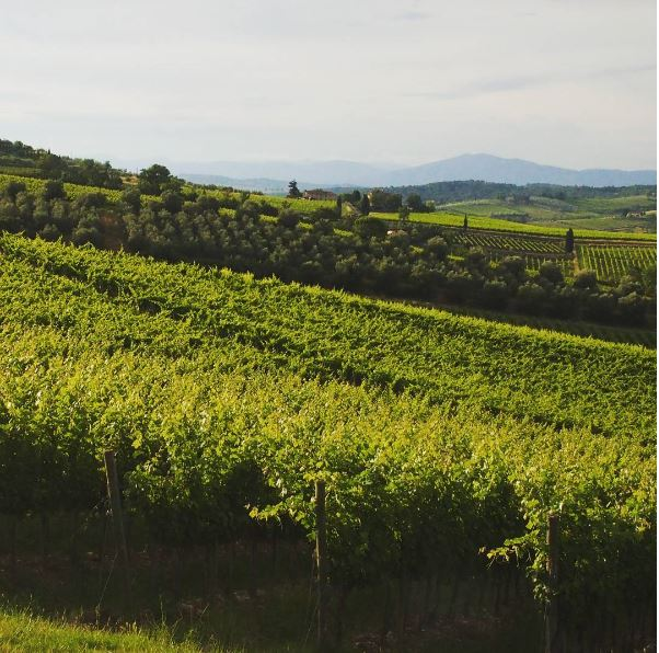 De wijngaarden bij onze agriturismo!