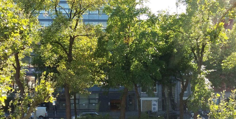 """""""Groen uitzicht"""" op de Stadhouderskade!"""