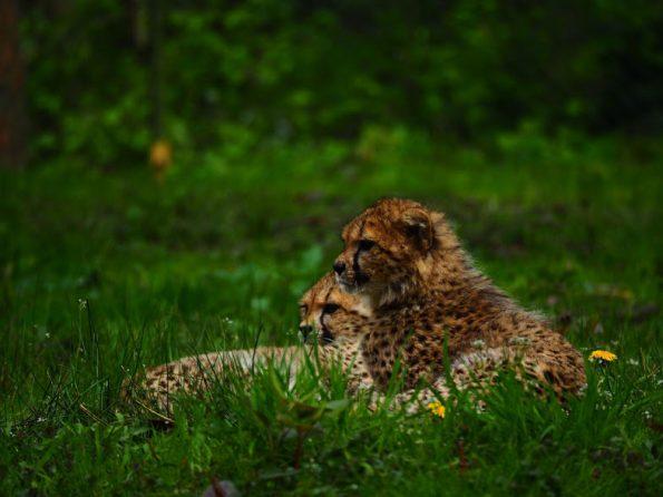 Burgers Zoo Fotografie Olympus