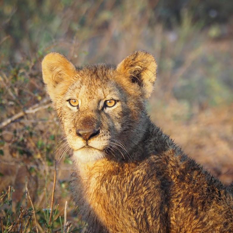 2017 Krugerpark Zomer
