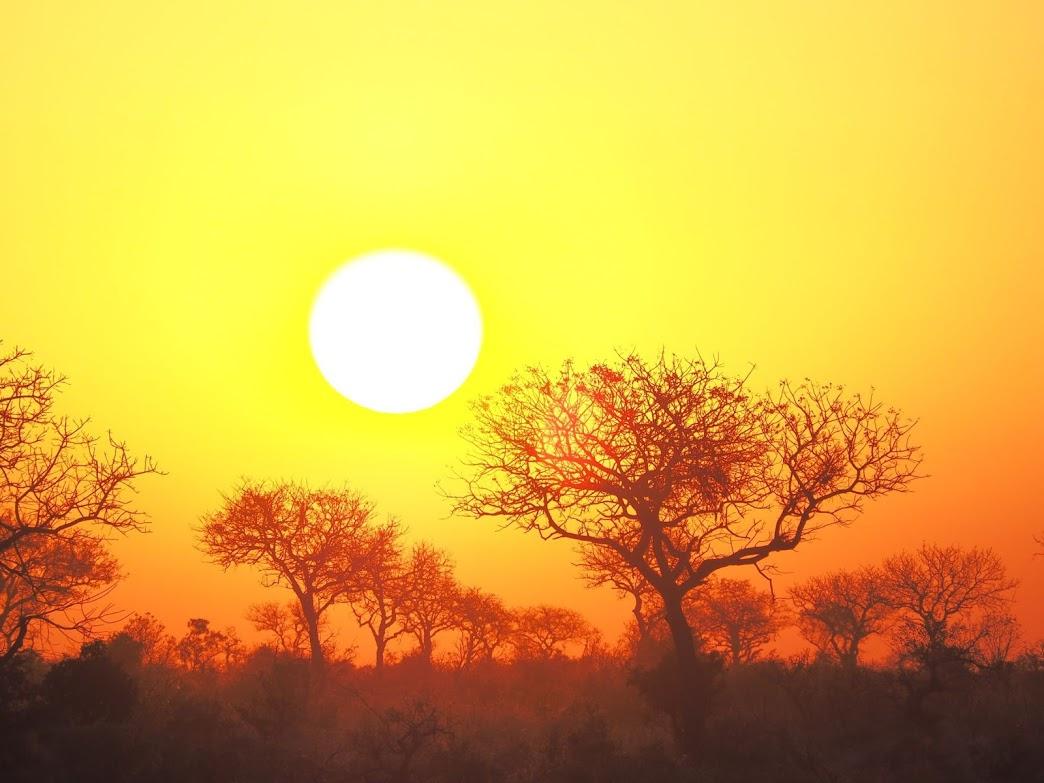 Krugerpark groepsreis zuid-Afrika