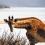 Spioenkop: Klein natuurreservaat bij de Drakensbergen