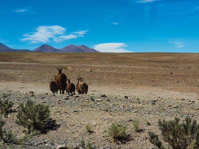 Chili Zuid-Amerika